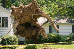 30323904 - uprooted tree fell on a house after a serious storm came through